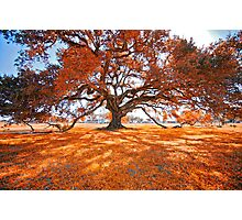 Dreaming of Autumn Photographic Print