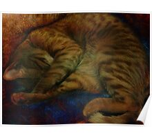 study of a sleeping cat Poster