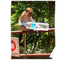 Monkey examines bottle Poster