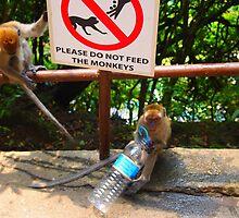 Do not feed the monkeys by Fike2308