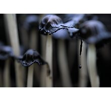 Melting army Photographic Print