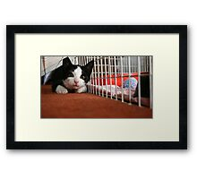 Ready to pounce! Framed Print
