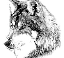 Wolf Face. Majestic Wolf Gazes Into The Distance. by digitaleclectic