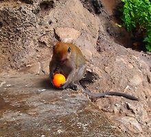 Monkey with orange by Fike2308