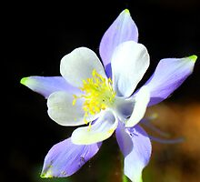 Petal Perfect (plus pollen) by Christine Ford