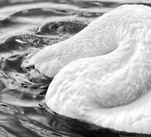 Swan Dive by Adrian Alford Photography