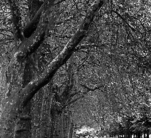 Hyde Park Stroll by Adrian Alford Photography