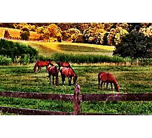 Grazing Photographic Print