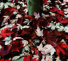 Fallen Leaves by Danielle Morin