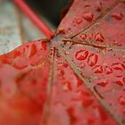 Leaf Droplets by Danielle Morin