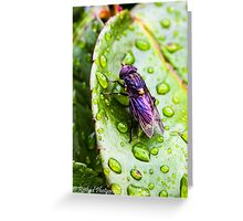 Just a fly Greeting Card
