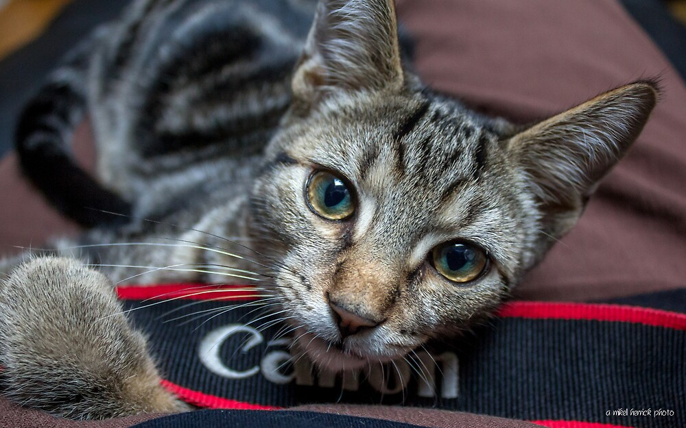 My Canon Cat by Mikell Herrick