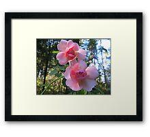 Heirloom Roses Framed Print