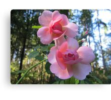 Heirloom Roses Canvas Print