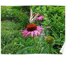Swallowtail fun Poster
