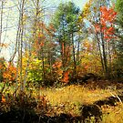 One More Fall 2013 by Elfriede Fulda