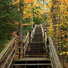 Steps through autumn at Au Sable National Scenic River by DArthurBrown