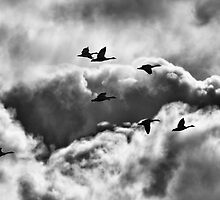 Stormy Flight by Thomas Young