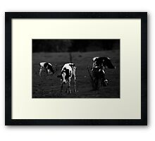 Cows (4) Framed Print