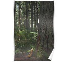 Bear in his natural habitat Poster