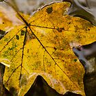 leaves on water by Septi79