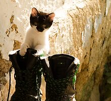 Baby cat exploring by Septi79