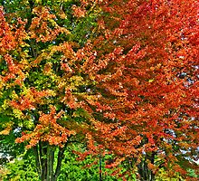 Fall Trees In Waukesha by EBArt