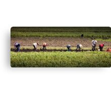 Chinese Farmers Canvas Print