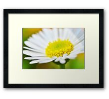 Seaside Daisy Framed Print