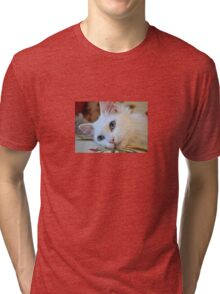 Portrait of A Blue Eyed Van Cat Tri-blend T-Shirt