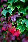 Autumn Colours... by Jeremy Lavender Photography