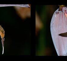 an acrobat in the banana tree  by Wieslaw Jan Syposz