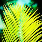 Palm Leaf by tropicalsamuelv