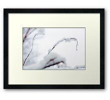 Snow Covered Branch Framed Print