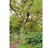 Tree in the wood Photographic Print