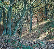 Trees, Mousehold Heath, Norwich, England by Joanna Rice