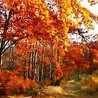 Autumn colors in Beskidy by bogfl