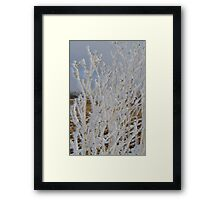 First Frost # 2 Framed Print
