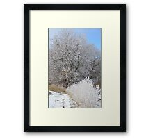 First Frost # 5 Framed Print