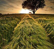Summer Sunset by Derek Smyth