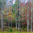 AUTUMN FOREST,CADES COVE by Chuck Wickham