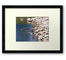 Geese # 2 Framed Print