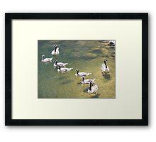 Geese # 3 Framed Print