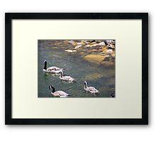 Geese # 4 Framed Print