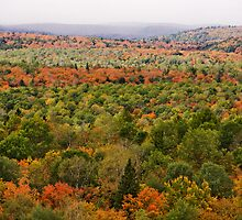 Algonquin Park - Fall Colours by christina chan
