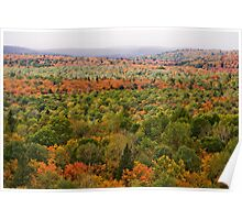 Algonquin Park - Fall Colours Poster