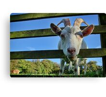 Is This What You Mean By Framing? Canvas Print