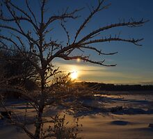 Minnesota in February # 3 by LifeCaptures