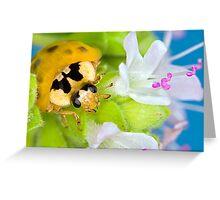 Ladybird - Ladybug - Marienkäfer - Glückskäfer III Greeting Card