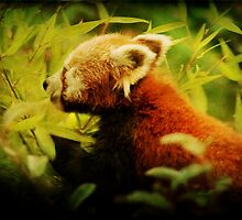 Red Panda Paradise by steppeland